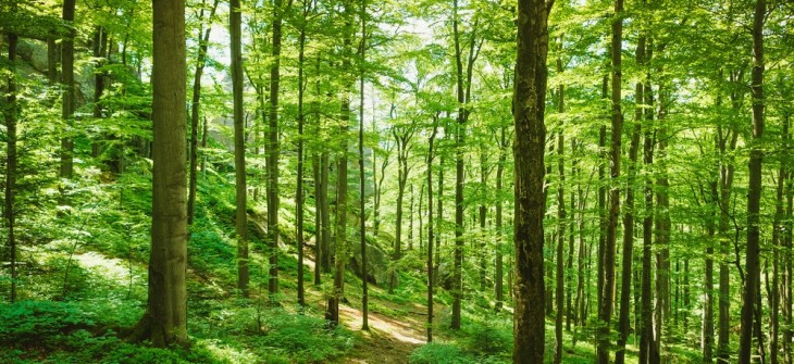 forest-1000x460.jpg